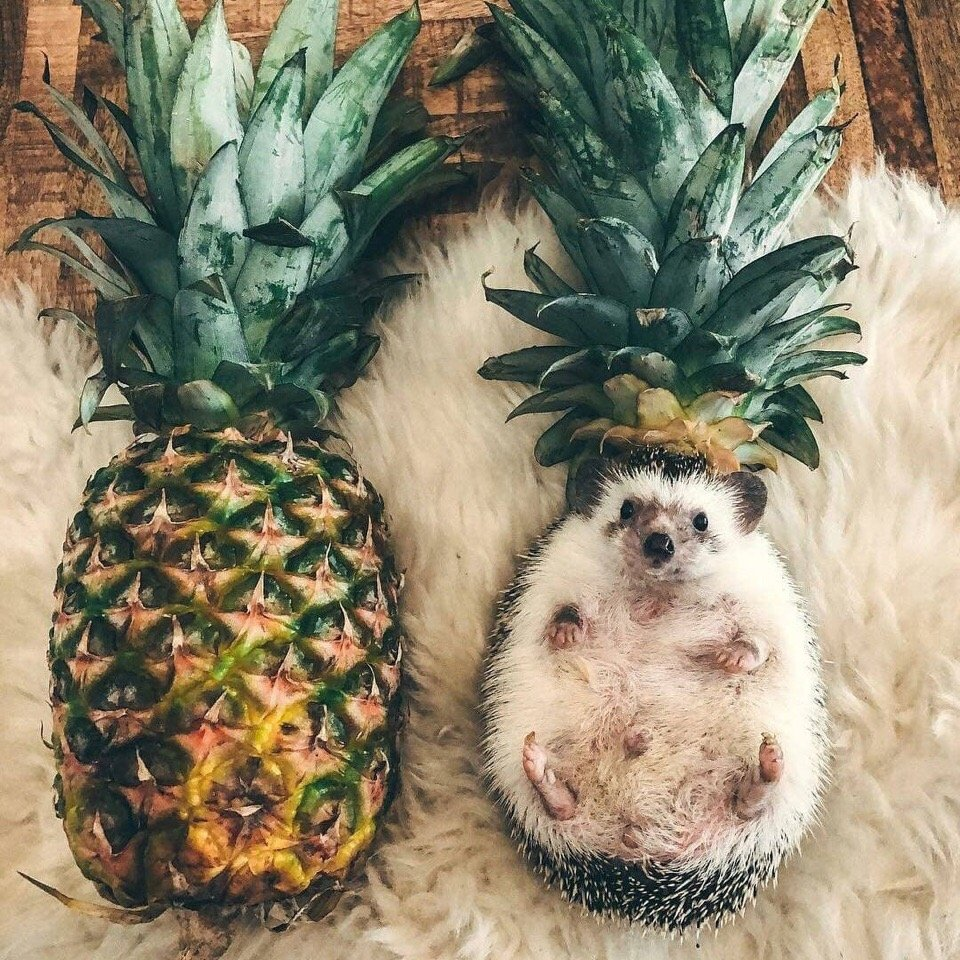 Ёжиковый ананас
