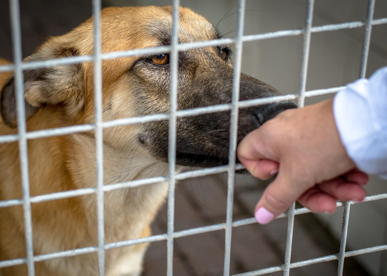 Что случается с животными в приютах