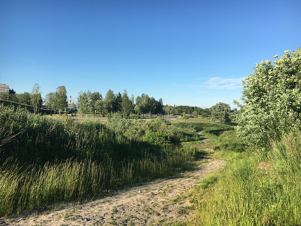 Лес и пересечённая местность